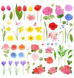 elegance collection of different beautiful fresh vector image