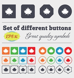 Maple leaf icon big set of colorful diverse vector
