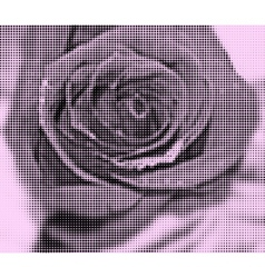 background roses created with black circles and vector image
