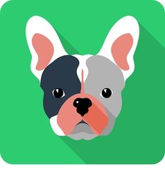 Dog french bulldog icon flat design vector