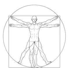 The Vitruvian man Royalty Free Vector Image - VectorStock