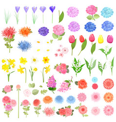 Collection of different lovely spring flowers for vector