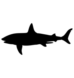 Basking shark vector