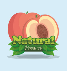 Apricot natural product label vector