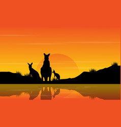 At sunset kangaroo scenery silhouettes vector