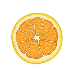 realistic orange slice citrus vector image