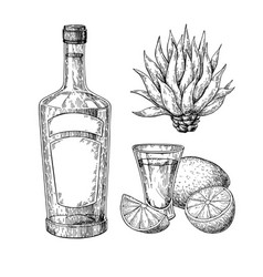 Tequila bottle blue agave and shot glass with vector