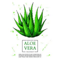 Aloe vera hand drawn artistic vector