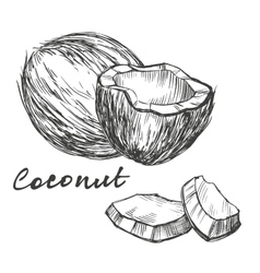 Coconut set hand drawn sketch vector