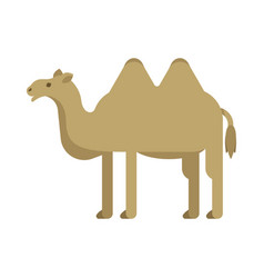 Flat style of camel vector