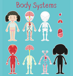 Diagram showing girl and body system vector