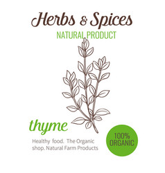 Hand drawn thyme vector