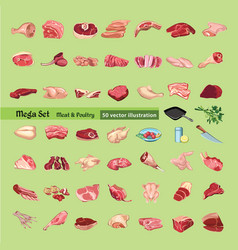 Sketch colored meat elements collection vector