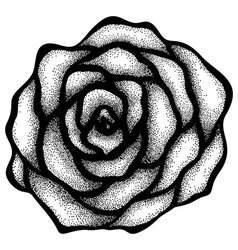Rose free-hand drawing in a graphic style points vector