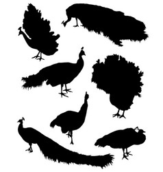 Collection of silhouettes of peacocks vector