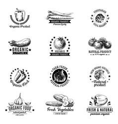 Set of labels badges and hand drawn design vector