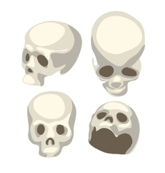 White human skull from four different angles vector
