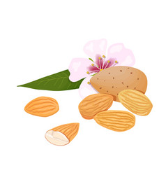 Almonds nuts in skins and peeled with leaf and vector