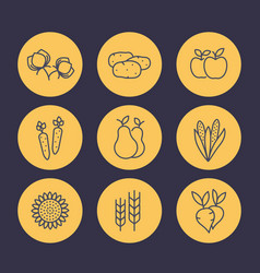 harvest line icons set organic farm food vector image vector image