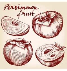 Fruit persimmon set hand drawn vector