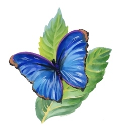 Watercolor blue butterfly on green leaves vector