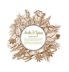 herbs and spices sketch poster vector image vector image
