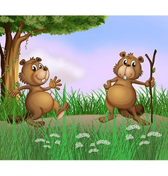 Two beavers playing in the forest vector