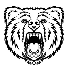Growling bear vector image