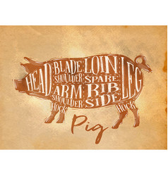 Pig pork cutting scheme craft vector