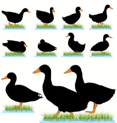 Ducks set vector