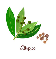 Blossoming allspice with seeds vector