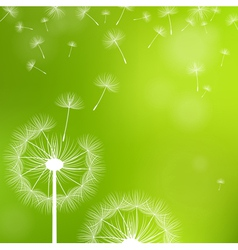 dandelions on a green background vector image