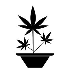 Hemp in pot icon simple style vector