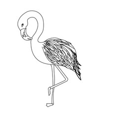 Line beauty and exotic flamingo bird animal vector