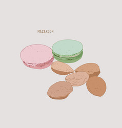 Macaroon and almonds sketch vector