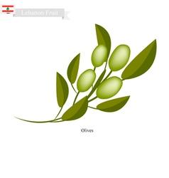 Ripe olive a popular fruit in lebanon vector