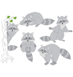 Raccoon set vector