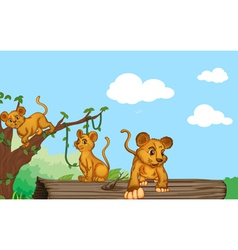 a group of cubs vector image vector image