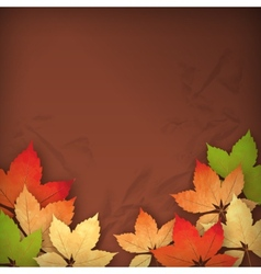 Autumn Fall Leaves vector image vector image