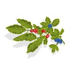 Blueberries twig vector