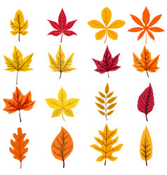 set of autumn leaves isolated on white background vector image