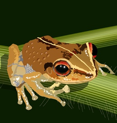 coqui frog vector image