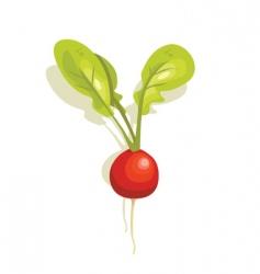 radish vector image