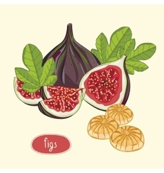 Figs fruits isolated on light background vector