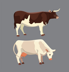 Different cows isolated vector