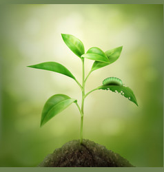 sprout in soil vector image vector image