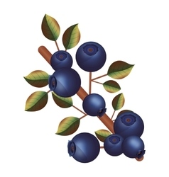 Isolated blueberry fruit with leaves design vector