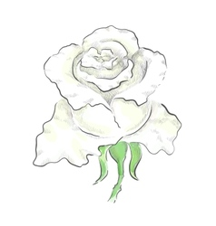 Decorative white rose vector