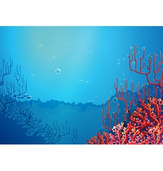 Beautiful corals under the sea vector image vector image