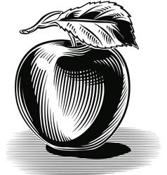 Green apple white background vector